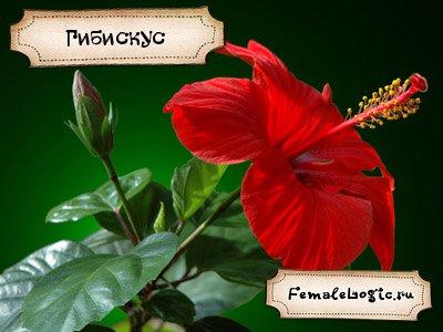 Удивительные цветы мира и названия 57