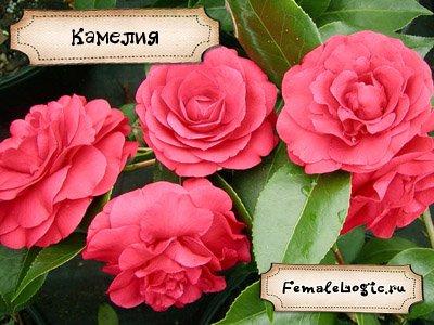 Удивительные цветы мира и названия 17