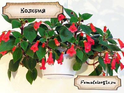 Удивительные цветы мира и названия 33